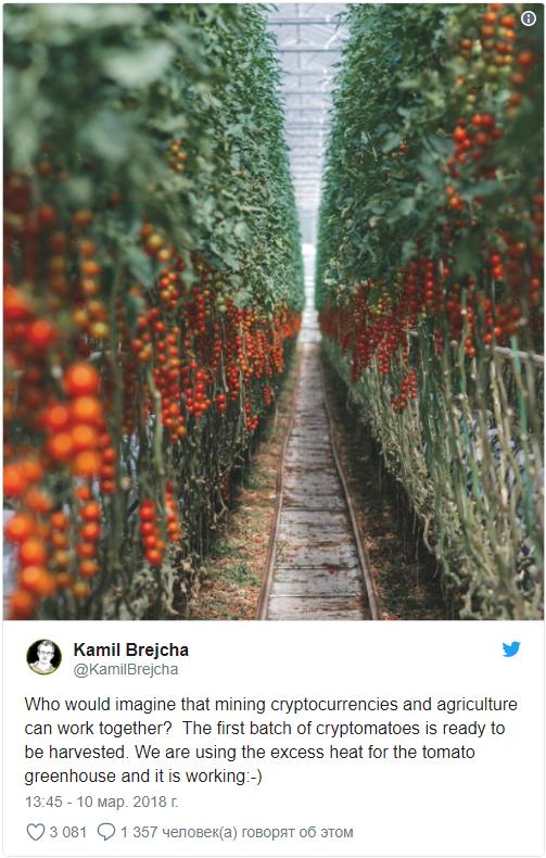 NakamotoX, крипто-томаты